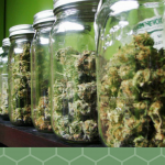 How to Cure Marijuana for Top Shelf Potency and Taste