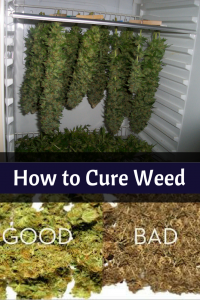 how to cure marijuana - How to Cure Weed