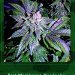 Best Cannabis Strains for Headaches - Naturally Relieve Headache Pain