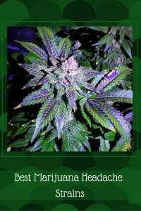 Best Marijuana Headache Strains