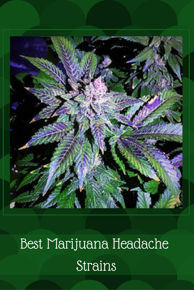 Best Marijuana Headache Strains
