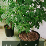 Hydroponic Grow Pots – Best Marijuana Grow Pots