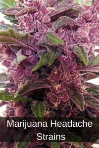 Marijuana Headache Strains