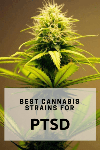 best cannabis strains for PTSD - Cannabis Post traumatic stress disorder